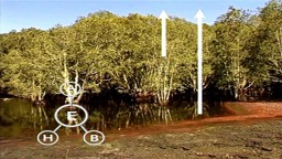 Biophysical Environment: Ecosystems and Interactions