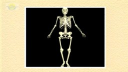 04. The Skeletal System