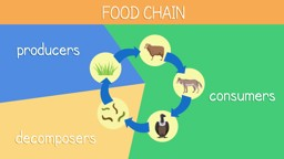 Animal Diets and Food Chains